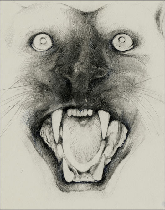 Pencil sketch of a panther's head with open mouth 'roariing'